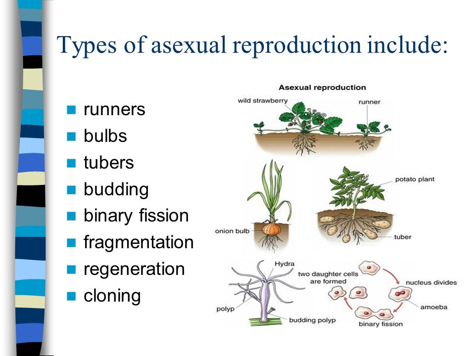 types of asexual reproduction in plants and examples pdf